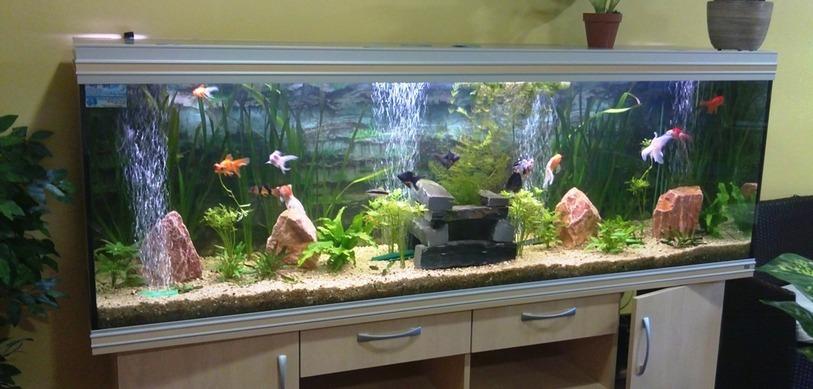 Quel aquarium choisir pour mon poisson - Quel poisson choisir pour un petit aquarium ...